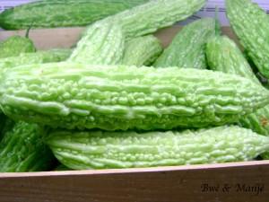 concombre amer