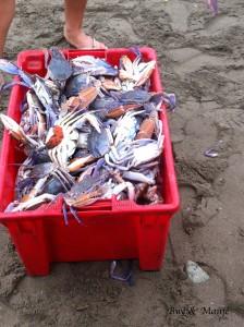 crabe frais