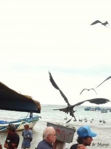 Autant  se servir dans le panier! Les pauvres pêcheurs couraient pour évier les oiseaux sans pitié!